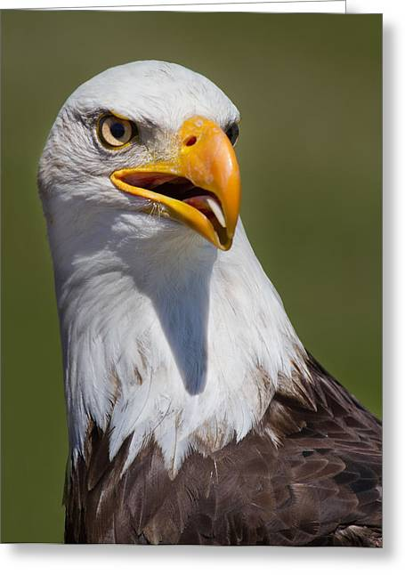 Beek Greeting Cards - Portrait of an Eagle Greeting Card by Naman Imagery