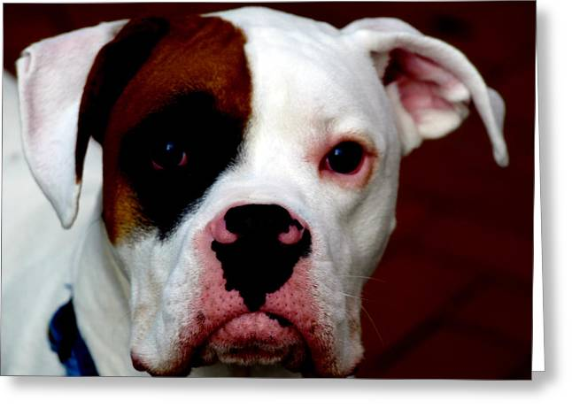 Boxer Digital Greeting Cards - Portrait of her best friend  Greeting Card by Steven  Digman