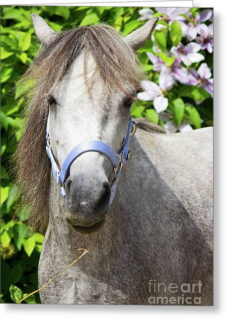 Scrubby Greeting Cards - Portrait of Lulu Greeting Card by Angela Doelling AD DESIGN Photo and PhotoArt