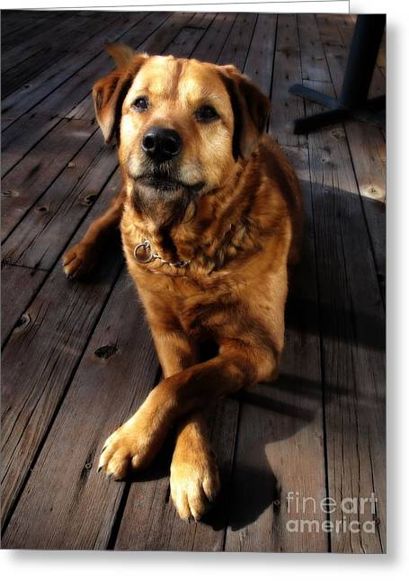 Retriever Prints Digital Art Greeting Cards - Pose for a Biscuit Greeting Card by Denise Oldridge