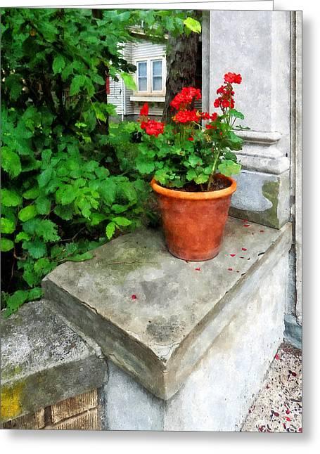 Geranium Greeting Cards - Pot of Geraniums on Stoop Greeting Card by Susan Savad