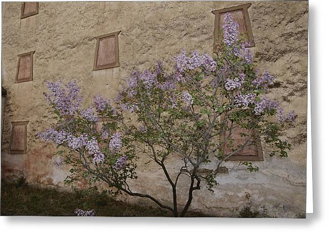 Buddhist Region Greeting Cards - Potala Temple And Lilac Tree Greeting Card by Raymond Gehman