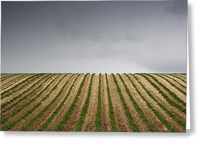 Potato Greeting Cards - Potato Field Greeting Card by John Short
