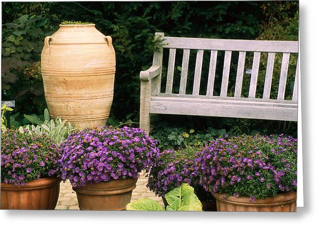 Benches And Chairs Greeting Cards - Potted Plants And A Garden Bench Greeting Card by Paul Damien