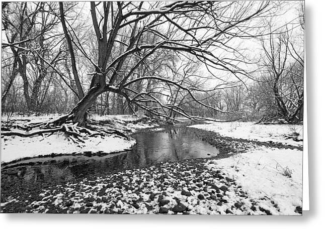 White River Greeting Cards - Poudre Black and White Greeting Card by James Steele