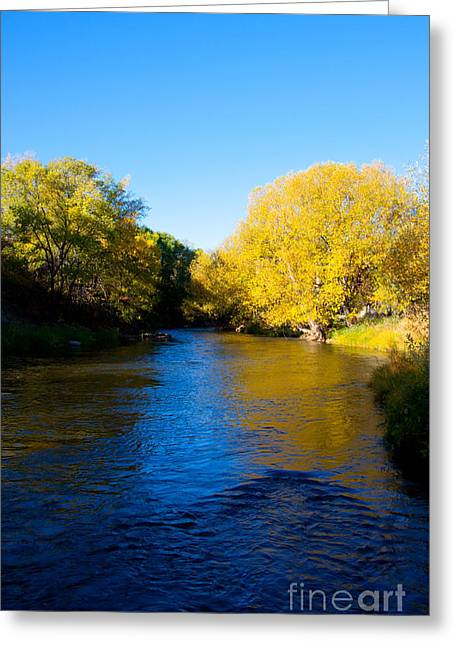 Yellow Trees Greeting Cards - Poudre River Greeting Card by Dana Kern