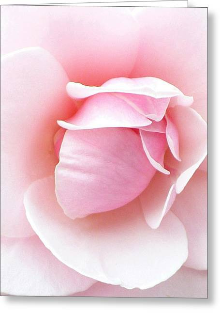 Soft Pink Greeting Cards - Powder Puff Rose Greeting Card by Florene Welebny