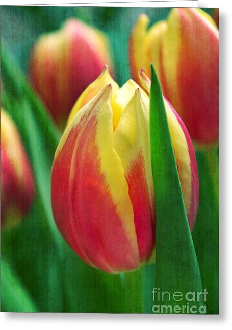 Texture Floral Greeting Cards - Power of color Greeting Card by Angela Doelling AD DESIGN Photo and PhotoArt