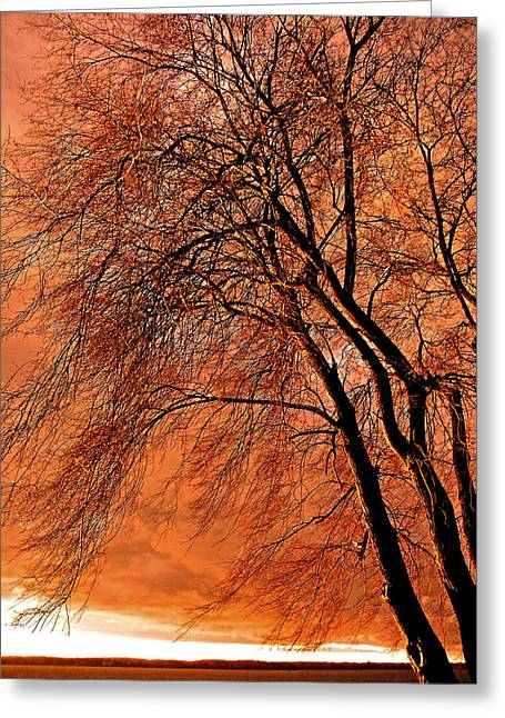 Matin Greeting Cards - Powerful Morning ... Greeting Card by Juergen Weiss