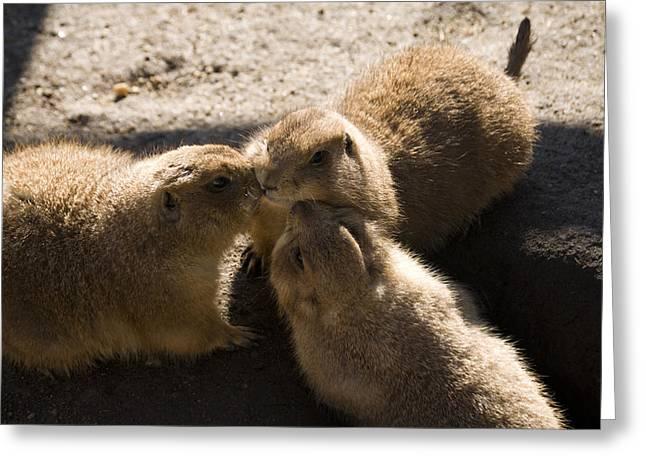 Prairie Dog Gossip Session Greeting Card by Trish Tritz