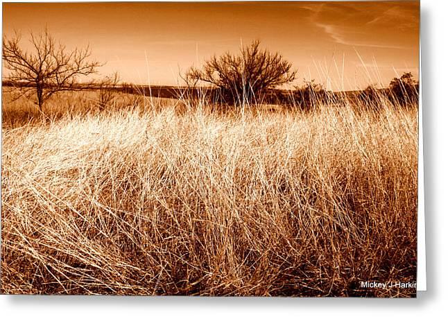 Mickey Harkins Greeting Cards - Prairie Grass Greeting Card by Mickey Harkins