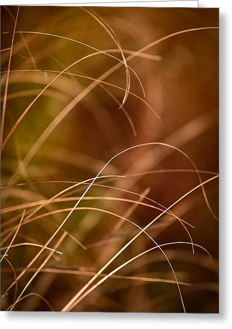 Prairie Photographs Greeting Cards - Prairie Grasses Number 4 Greeting Card by Steve Gadomski
