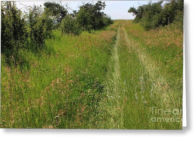 Prairie Trail Through Grasses Greeting Card by Jim Sauchyn