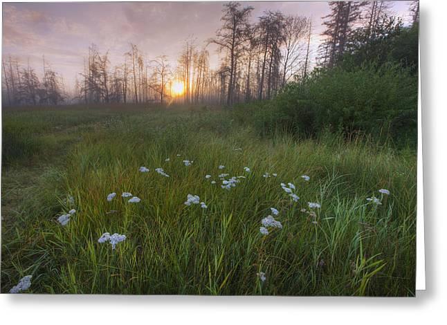 Alberta Prairie Landscape Greeting Cards - Prairie Wildflowers On The Edge Greeting Card by Dan Jurak