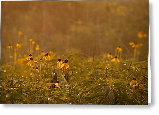 Prairie Photographs Greeting Cards - Prairie Wildflowers Greeting Card by Steve Gadomski
