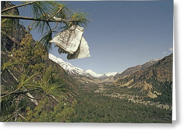 Pine Needles Greeting Cards - Prayer Flags In Pine Tree Above Valley Greeting Card by Gordon Wiltsie