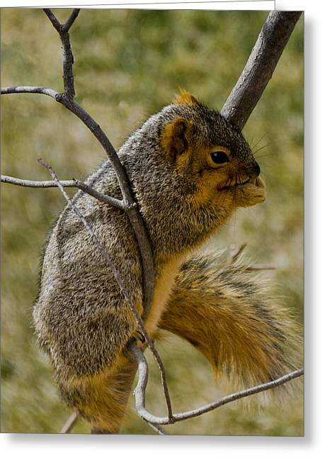 Squirrel Greeting Cards - Praying Squirrel Greeting Card by LeeAnn McLaneGoetz McLaneGoetzStudioLLCcom