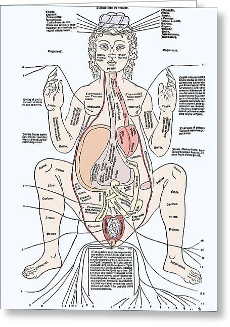 Female Body Greeting Cards - Pregnancy Anatomy, 15th Century Artwork Greeting Card by Sheila Terry