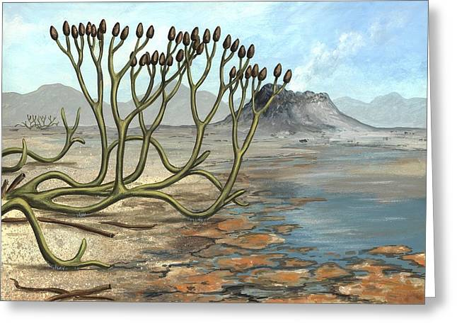 Aquatic Bacteria Greeting Cards - Prehistoric Club Moss, Artwork Greeting Card by Richard Bizley