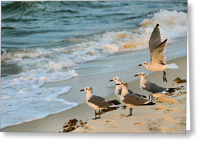 Tern Greeting Cards - Prepare for Landing Greeting Card by Kristin Elmquist