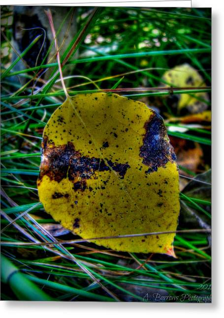 Prescott Greeting Cards - Prescott National Forest Aspen Leaf Greeting Card by Aaron Burrows