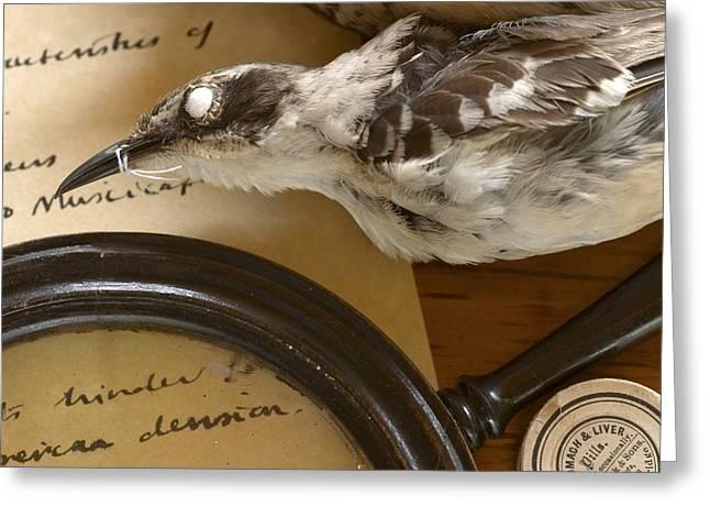John Gould Greeting Cards - Preserved Galapagos Mockingbird Greeting Card by Paul D Stewart