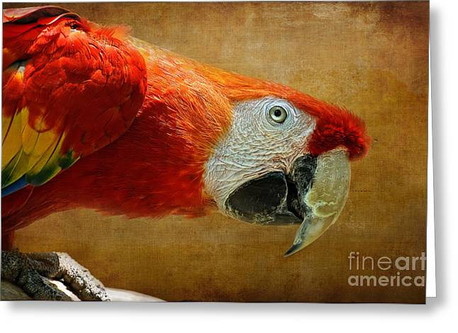 Macaw Parrot Greeting Cards - Pretty Boy Greeting Card by Lois Bryan