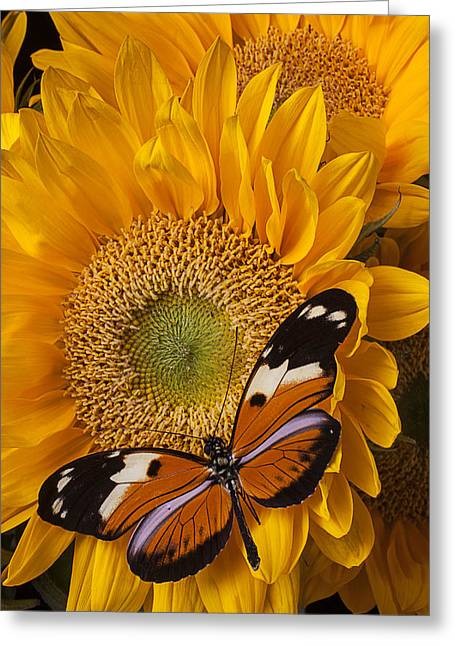 Golden Greeting Cards - Pretty butterfly on sunflowers Greeting Card by Garry Gay