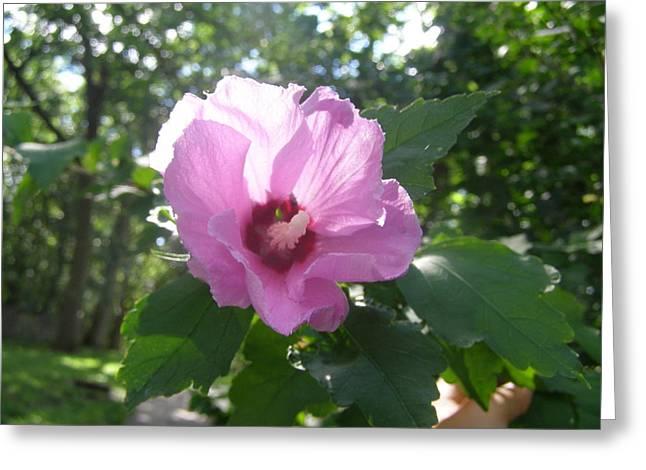 Brityn Klehr Photographs Greeting Cards - Pretty In Pink Greeting Card by Brityn Klehr