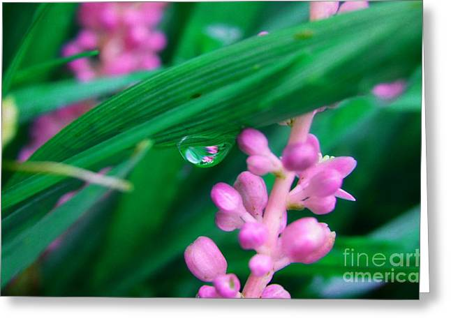 Pretty In Pink  Greeting Card by Peggy  Franz