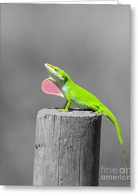 Outdoor Photography Digital Greeting Cards - Pretty Penny - Selective Color Greeting Card by Al Powell Photography USA