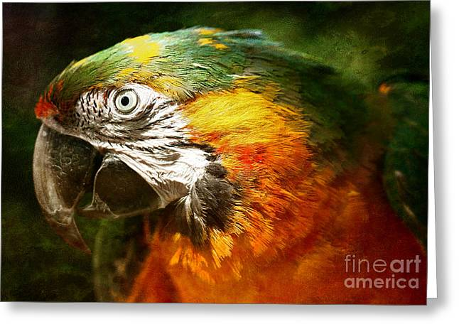 Best Sellers -  - White Digital Art Greeting Cards - Pretty Polly Greeting Card by Lee-Anne Rafferty-Evans