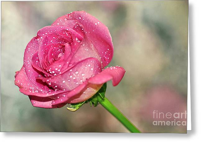 Wet Petals Greeting Cards - Pretty Rose Greeting Card by Kaye Menner