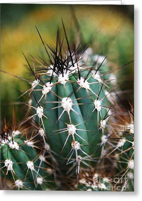 Leda Photography Greeting Cards - Prickly  Greeting Card by Leslie Leda