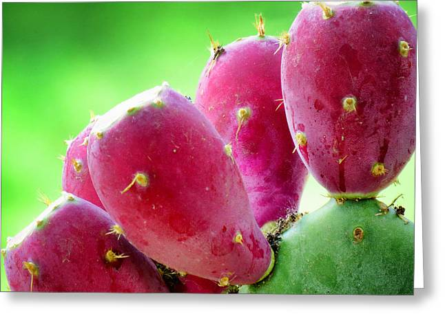 Prickly Pear Greeting Card by Diane Wood