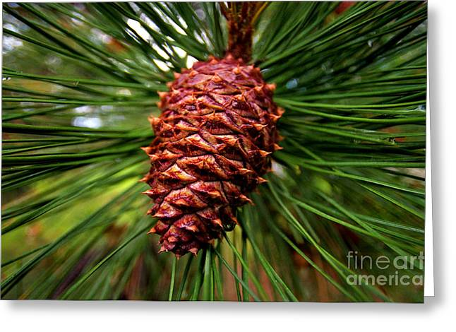 Pine Cones Greeting Cards - Prickly Pine Cone Greeting Card by Terry Elniski
