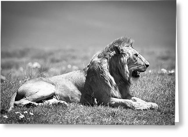 Ngorongoro Crater Greeting Cards - Pride in Black and White Greeting Card by Sebastian Musial