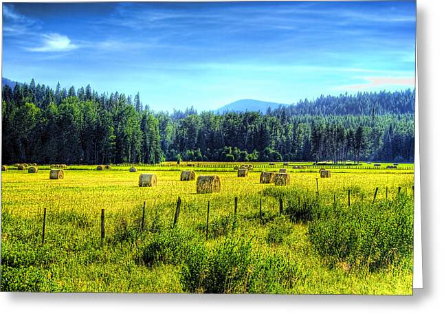 Hay Bales Greeting Cards - Priest Lake Hay Greeting Card by David Patterson