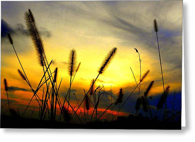 Sunset Framed Prints Greeting Cards - Primary Sunset Greeting Card by Sheri McLeroy