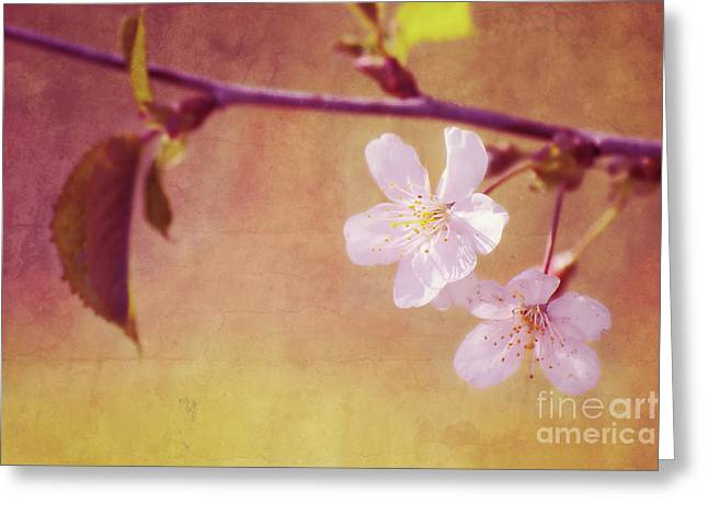 White River Mixed Media Greeting Cards - Primavera Greeting Card by Angela Doelling AD DESIGN Photo and PhotoArt