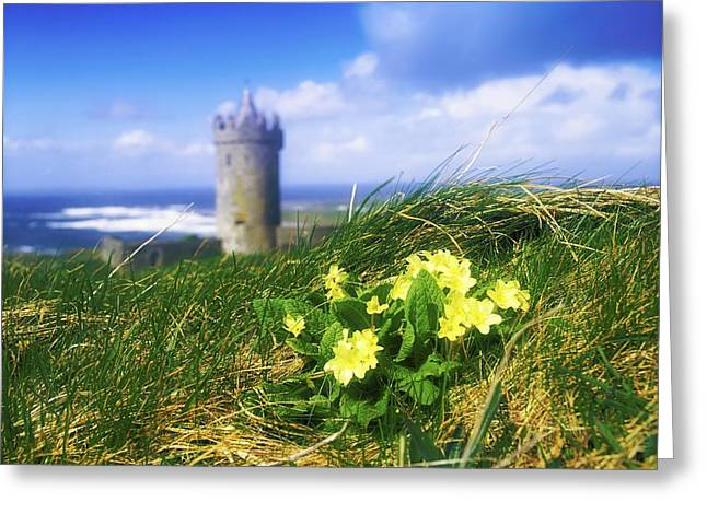 Primrose Flower In Foreground Greeting Card by The Irish Image Collection