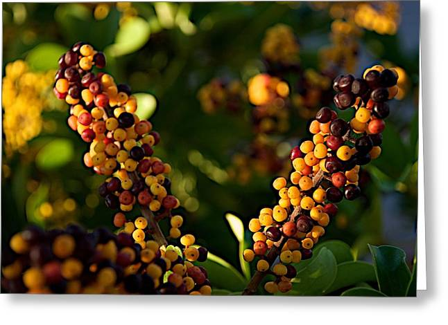 Berry Greeting Cards - Private Greeting Card by Joseph Yarbrough