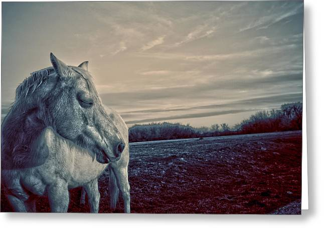 Profile of a Horse Greeting Card by Toni Hopper