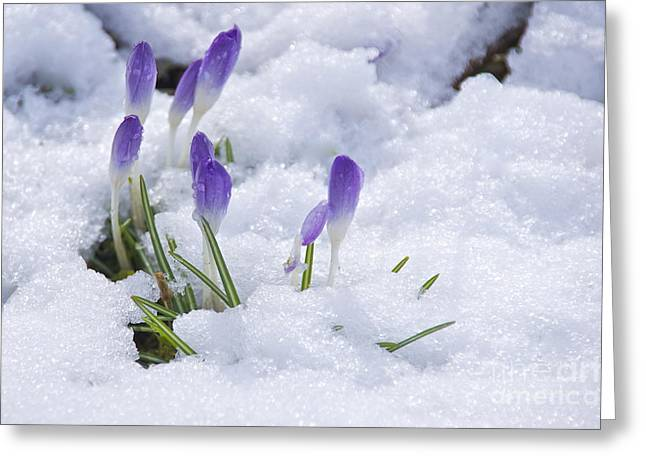 Lightscapes Photography Greeting Cards - Promise of Spring Greeting Card by Sean Griffin