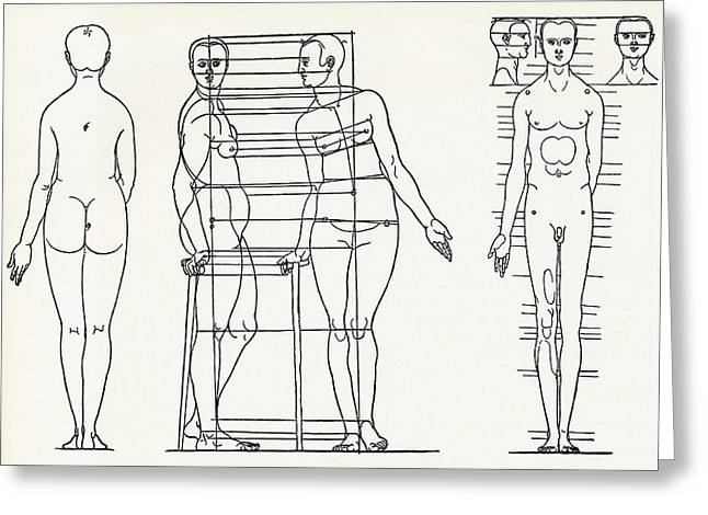 Proportions Of Man Greeting Cards - Proportions Of The Human Body Greeting Card by Sheila Terry