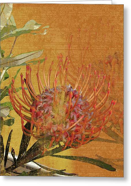 Orange Pin Cushion Greeting Cards - Protea 1 Greeting Card by Kaypee Soh - Printscapes