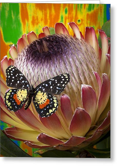 Proteas Greeting Cards - Protea with speckled butterfly Greeting Card by Garry Gay