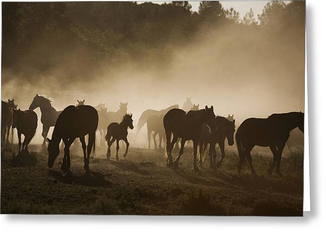 Silhouettes Of Horses Greeting Cards - Protected Mustangs In The Morning Mist Greeting Card by Melissa Farlow
