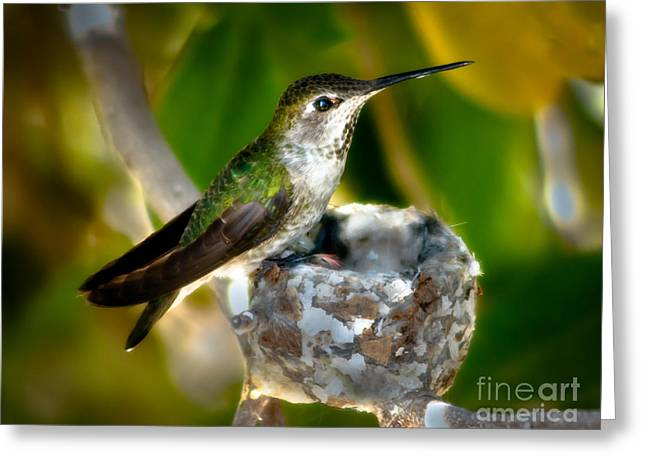 Trochilidae Greeting Cards - Proud Mother Greeting Card by Robert Bales