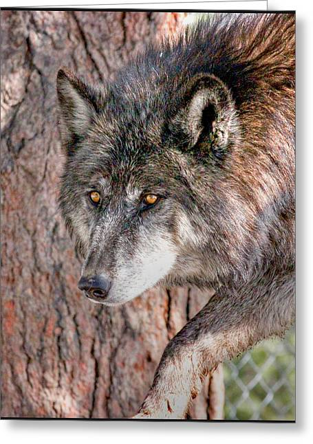 Stellina Giannitsi Greeting Cards - Prowler Greeting Card by Stellina Giannitsi